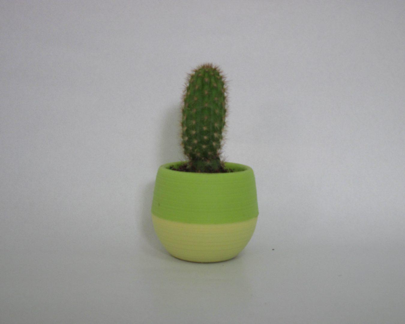 الصبارة العاشرة - Cactus